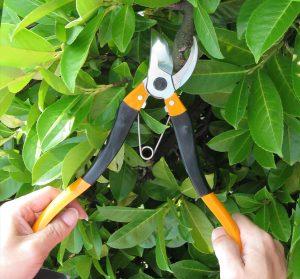 294-forbici-per-potare-troncarami-handy-lopper-8